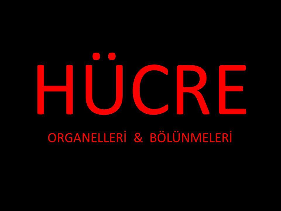 HÜCRE ORGANELLERİ & BÖLÜNMELERİ