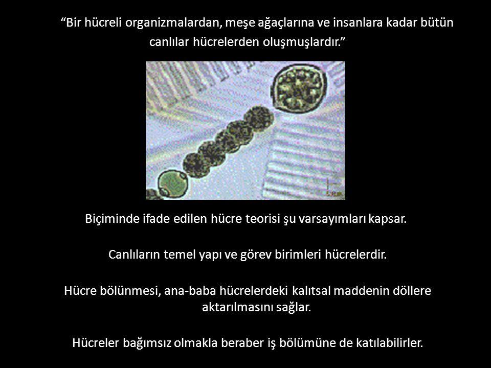 """""""Bir hücreli organizmalardan, meşe ağaçlarına ve insanlara kadar bütün canlılar hücrelerden oluşmuşlardır."""" Biçiminde ifade edilen hücre teorisi şu va"""