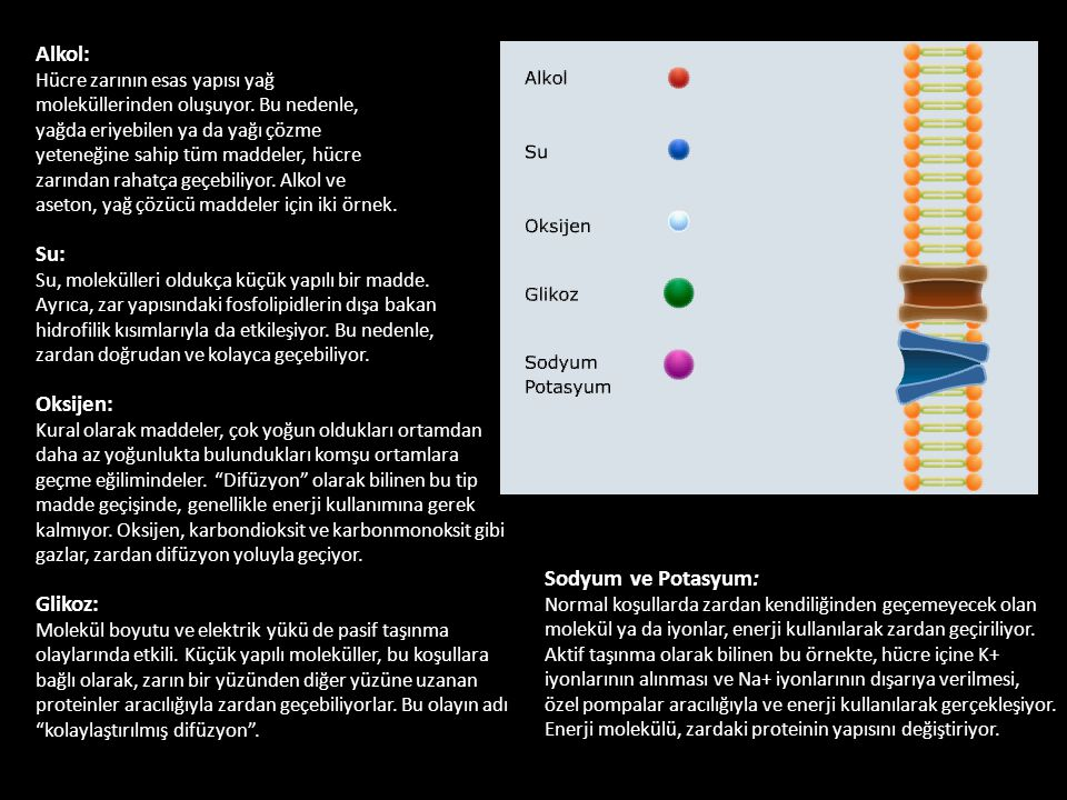 Alkol: Hücre zarının esas yapısı yağ moleküllerinden oluşuyor. Bu nedenle, yağda eriyebilen ya da yağı çözme yeteneğine sahip tüm maddeler, hücre zarı