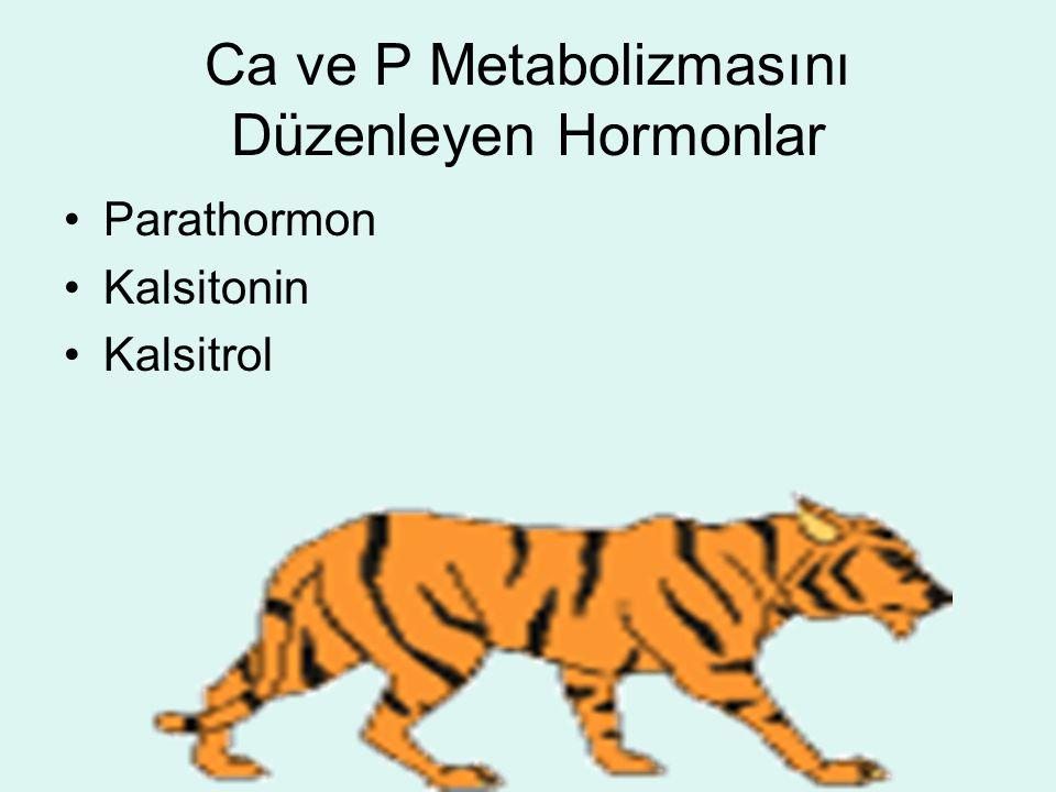 Ca ve P Metabolizmasını Düzenleyen Hormonlar Parathormon Kalsitonin Kalsitrol