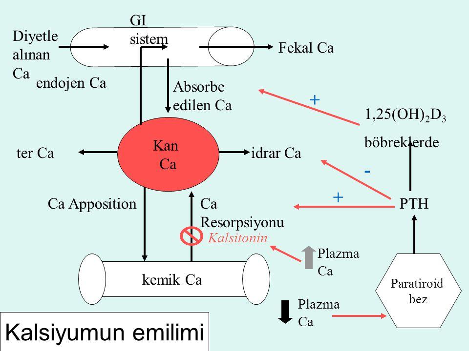 Kan Ca kemik Ca Diyetle alınan Ca Absorbe edilen Ca endojen Ca Fekal Ca ter Caidrar Ca GI sistem Ca AppositionCa Resorpsiyonu Kalsitonin Paratiroid be