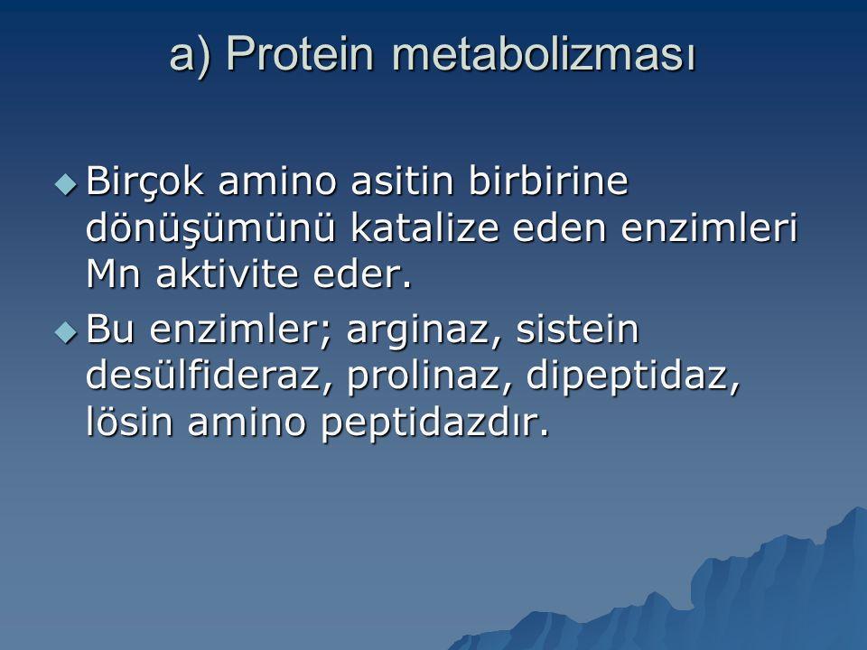 a) Protein metabolizması  Birçok amino asitin birbirine dönüşümünü katalize eden enzimleri Mn aktivite eder.  Bu enzimler; arginaz, sistein desülfid