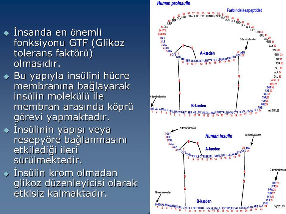  İnsanda en ö nemli fonksiyonu GTF (Glikoz tolerans fakt ö r ü ) olmasıdır.  Bu yapıyla ins ü lini h ü cre membranına bağlayarak ins ü lin molek ü l