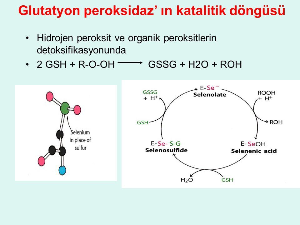 Hidrojen peroksit ve organik peroksitlerin detoksifikasyonunda 2 GSH + R-O-OH GSSG + H2O + ROH Glutatyon peroksidaz' ın katalitik döngüsü