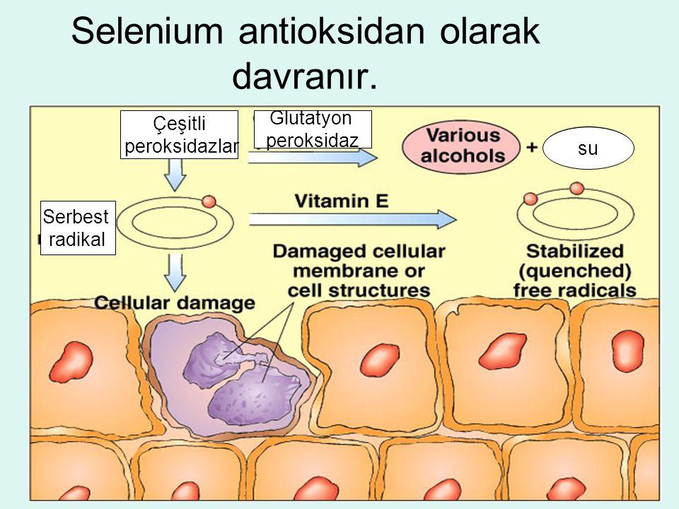 Selenium antioksidan olarak davranır. Serbest radikal Çeşitli peroksidazlar su Glutatyon peroksidaz