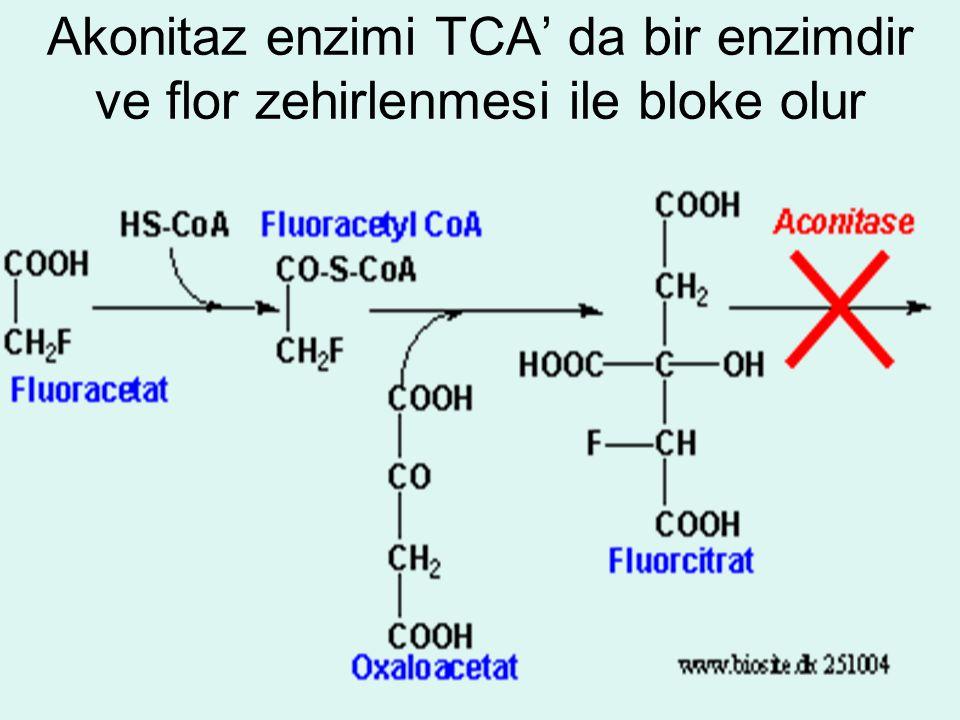 Akonitaz enzimi TCA' da bir enzimdir ve flor zehirlenmesi ile bloke olur