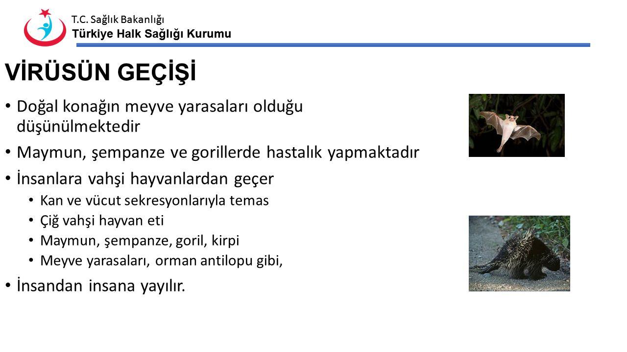 T.C. Sağlık Bakanlığı Türkiye Halk Sağlığı Kurumu T.C. Sağlık Bakanlığı Türkiye Halk Sağlığı Kurumu VİRÜSÜN GEÇİŞİ Doğal konağın meyve yarasaları oldu