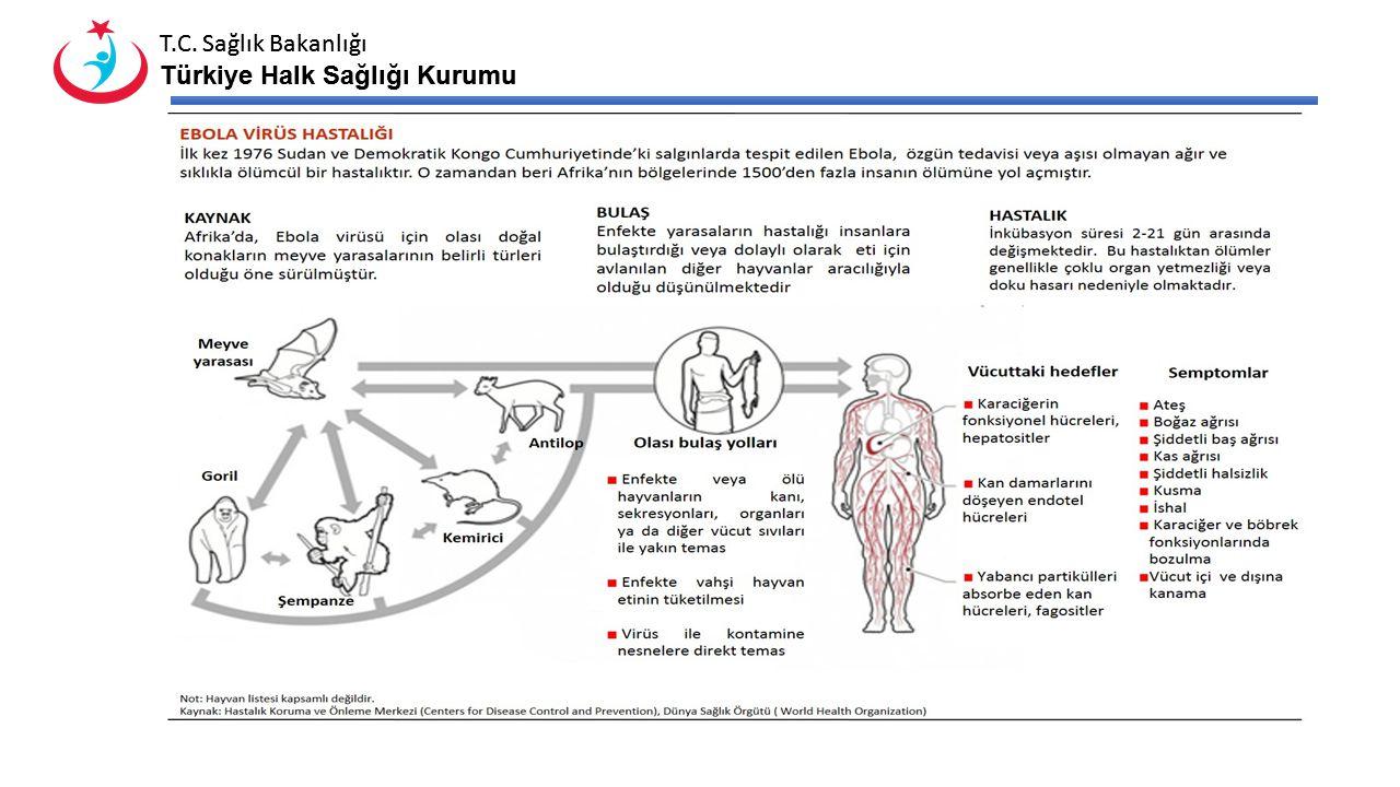T.C. Sağlık Bakanlığı Türkiye Halk Sağlığı Kurumu T.C. Sağlık Bakanlığı Türkiye Halk Sağlığı Kurumu
