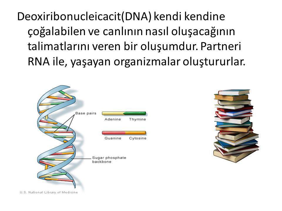 Deoxiribonucleicacit(DNA) kendi kendine çoğalabilen ve canlının nasıl oluşacağının talimatlarını veren bir oluşumdur. Partneri RNA ile, yaşayan organi