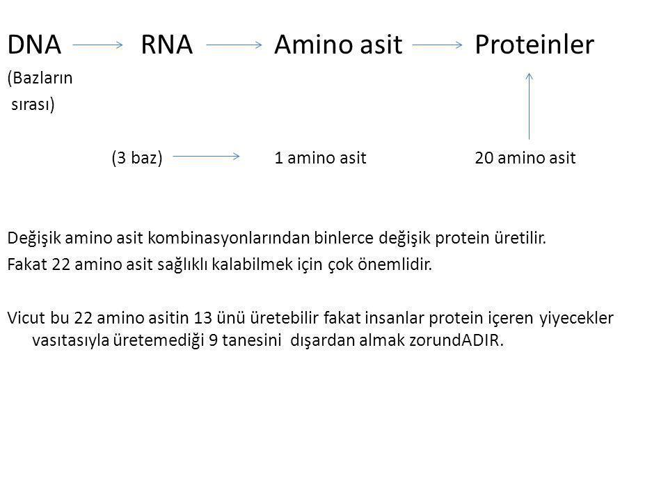 DNA RNAAmino asitProteinler (Bazların sırası) (3 baz) 1 amino asit 20 amino asit Değişik amino asit kombinasyonlarından binlerce değişik protein üreti