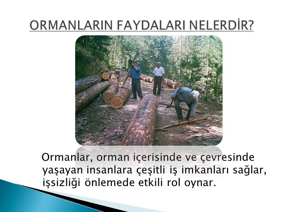 Ormanlar, orman içerisinde ve çevresinde yaşayan insanlara çeşitli iş imkanları sağlar, işsizliği önlemede etkili rol oynar.