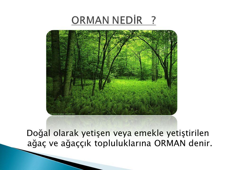 Doğal olarak yetişen veya emekle yetiştirilen ağaç ve ağaççık topluluklarına ORMAN denir.