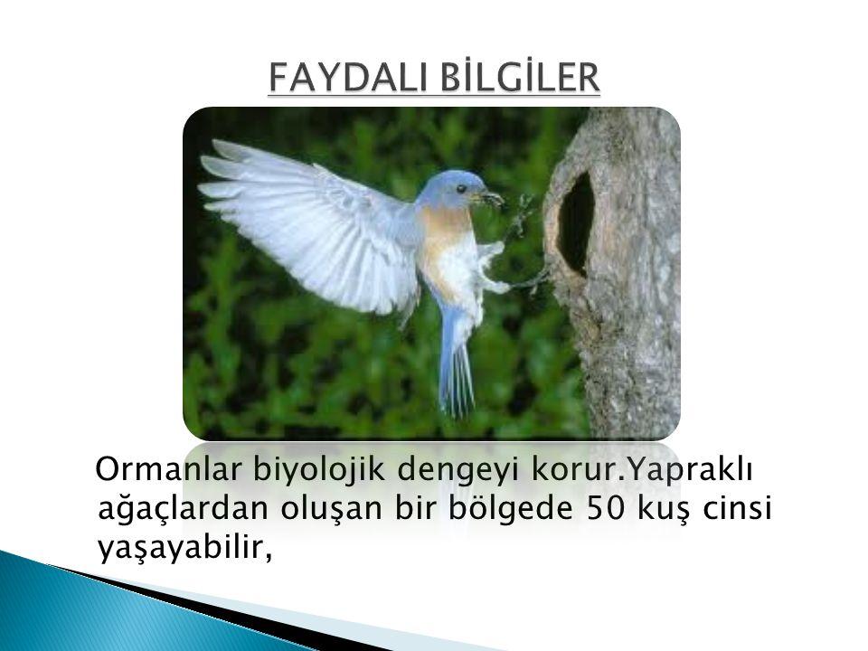 Ormanlar biyolojik dengeyi korur.Yapraklı ağaçlardan oluşan bir bölgede 50 kuş cinsi yaşayabilir,