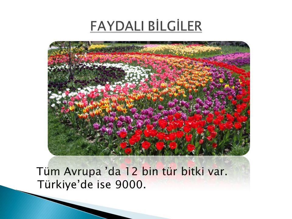 Tüm Avrupa 'da 12 bin tür bitki var. Türkiye'de ise 9000.