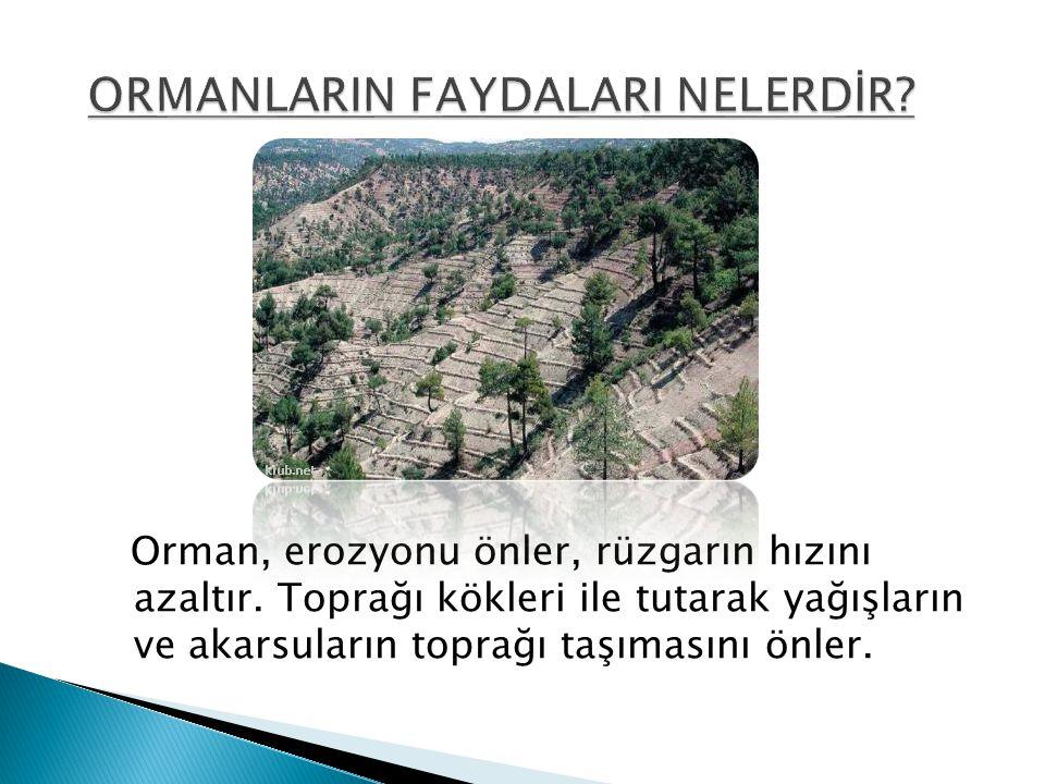Orman, erozyonu önler, rüzgarın hızını azaltır. Toprağı kökleri ile tutarak yağışların ve akarsuların toprağı taşımasını önler.
