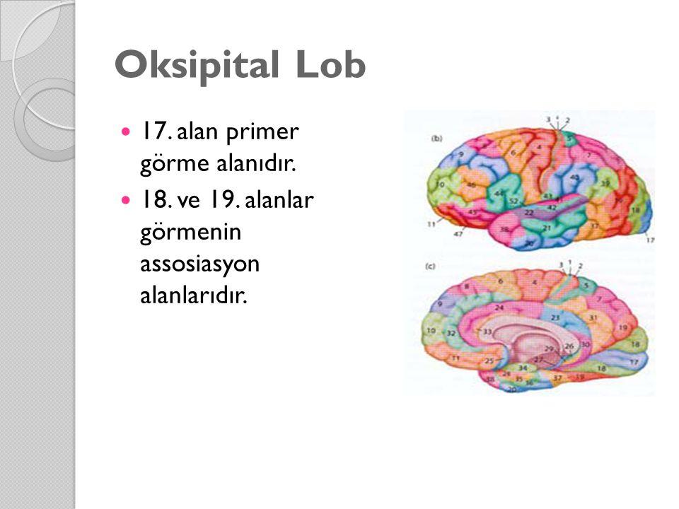 Oksipital Lob 17. alan primer görme alanıdır. 18. ve 19. alanlar görmenin assosiasyon alanlarıdır.