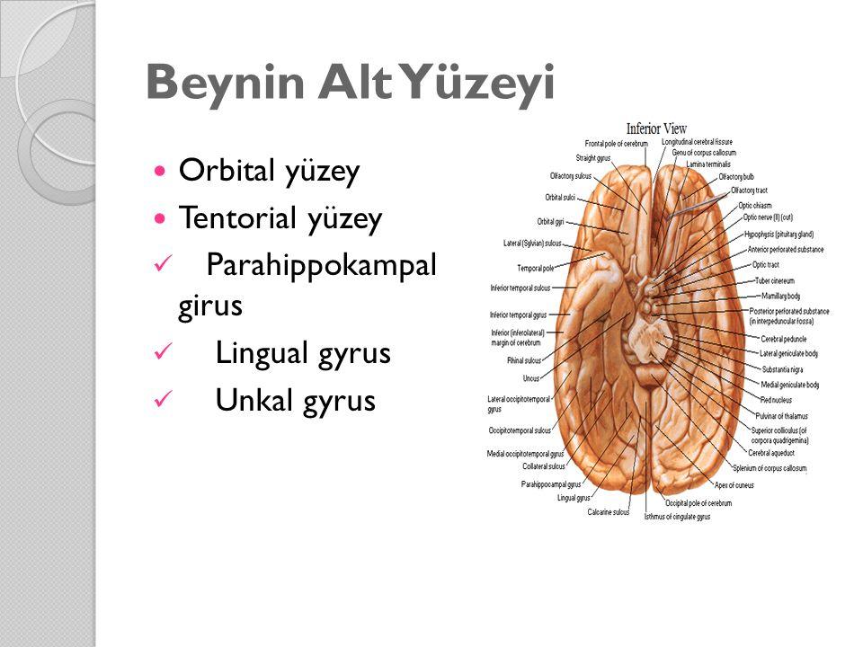 Beynin Alt Yüzeyi Orbital yüzey Tentorial yüzey Parahippokampal girus Lingual gyrus Unkal gyrus