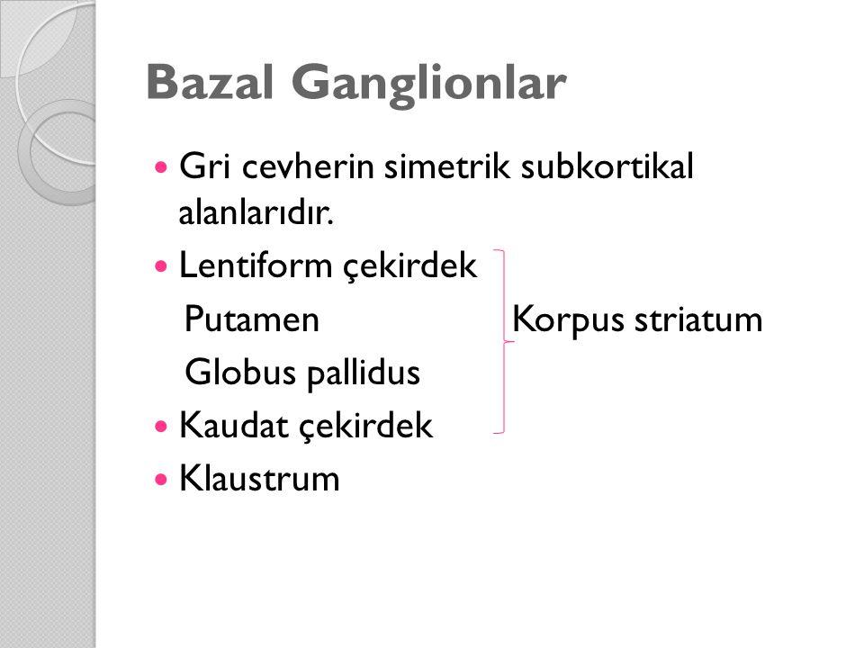 Bazal Ganglionlar Gri cevherin simetrik subkortikal alanlarıdır. Lentiform çekirdek Putamen Korpus striatum Globus pallidus Kaudat çekirdek Klaustrum