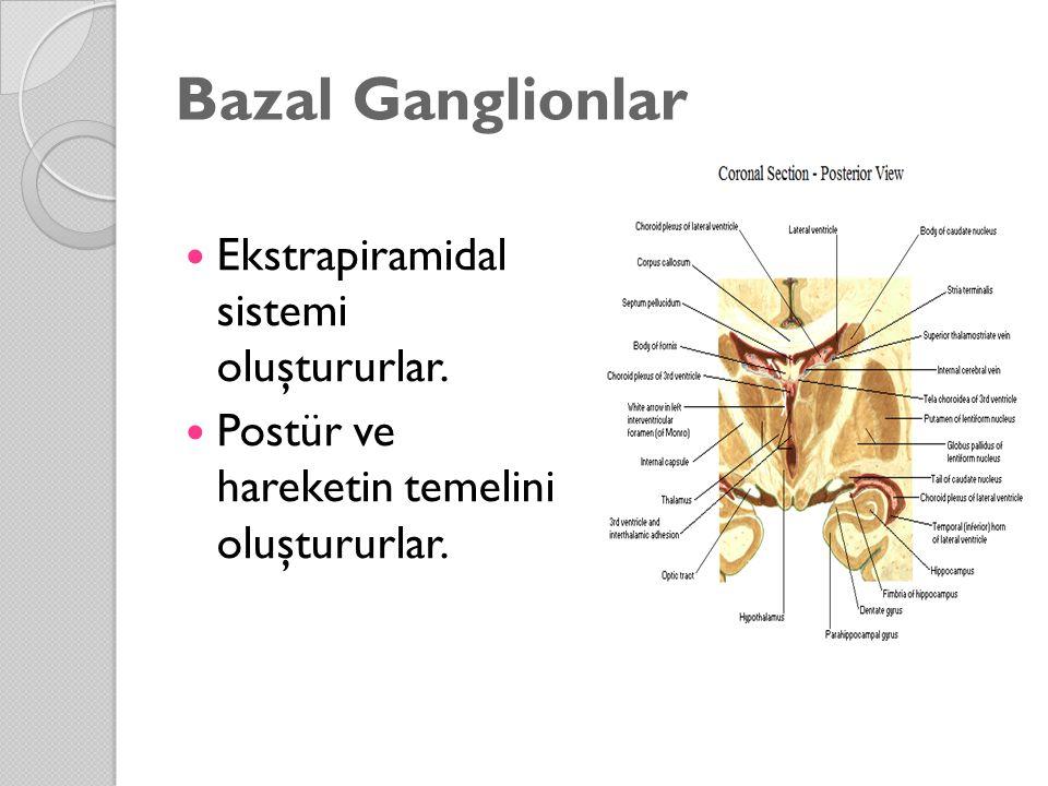 Bazal Ganglionlar Ekstrapiramidal sistemi oluştururlar. Postür ve hareketin temelini oluştururlar.