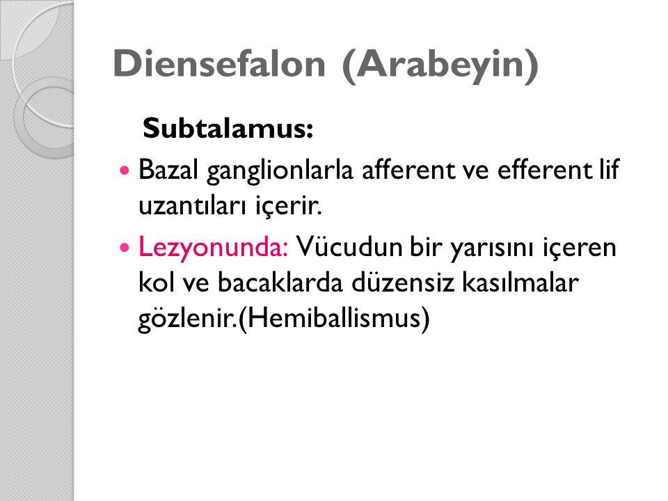 Diensefalon (Arabeyin) Subtalamus: Bazal ganglionlarla afferent ve efferent lif uzantıları içerir.