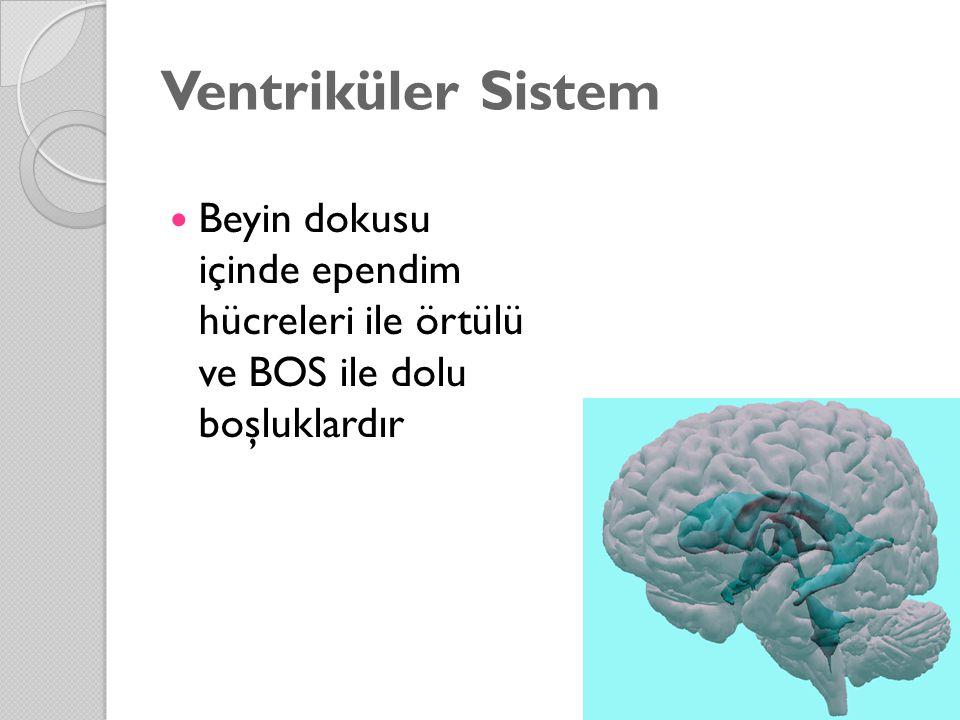 Ventriküler Sistem Beyin dokusu içinde ependim hücreleri ile örtülü ve BOS ile dolu boşluklardır