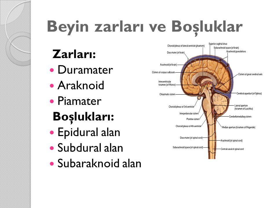 Beyin zarları ve Boşluklar Zarları: Duramater Araknoid Piamater Boşlukları: Epidural alan Subdural alan Subaraknoid alan
