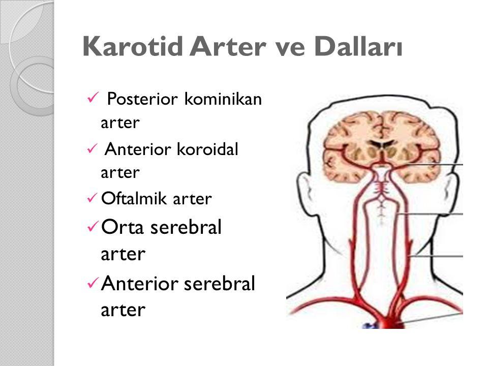 Karotid Arter ve Dalları Posterior kominikan arter Anterior koroidal arter Oftalmik arter Orta serebral arter Anterior serebral arter