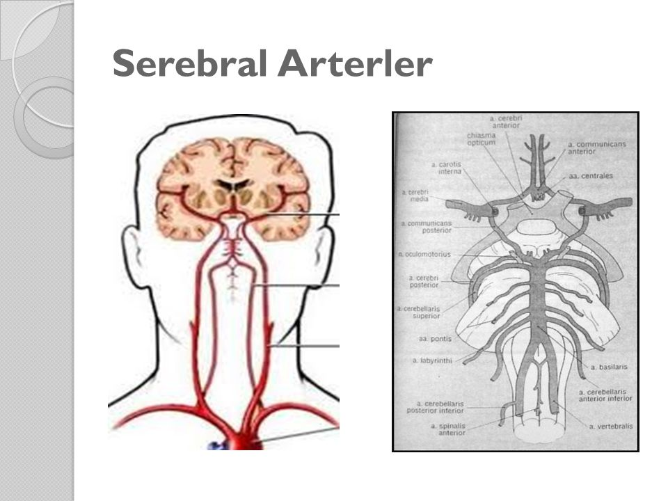 Serebral Arterler
