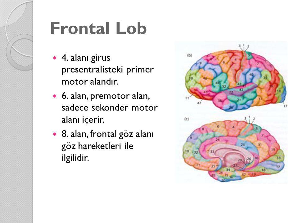 Frontal Lob 4. alanı girus presentralisteki primer motor alandır. 6. alan, premotor alan, sadece sekonder motor alanı içerir. 8. alan, frontal göz ala