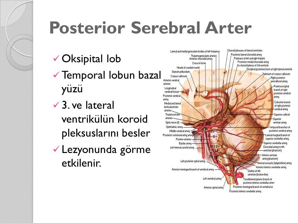 Posterior Serebral Arter Oksipital lob Temporal lobun bazal yüzü 3. ve lateral ventrikülün koroid pleksuslarını besler Lezyonunda görme etkilenir.