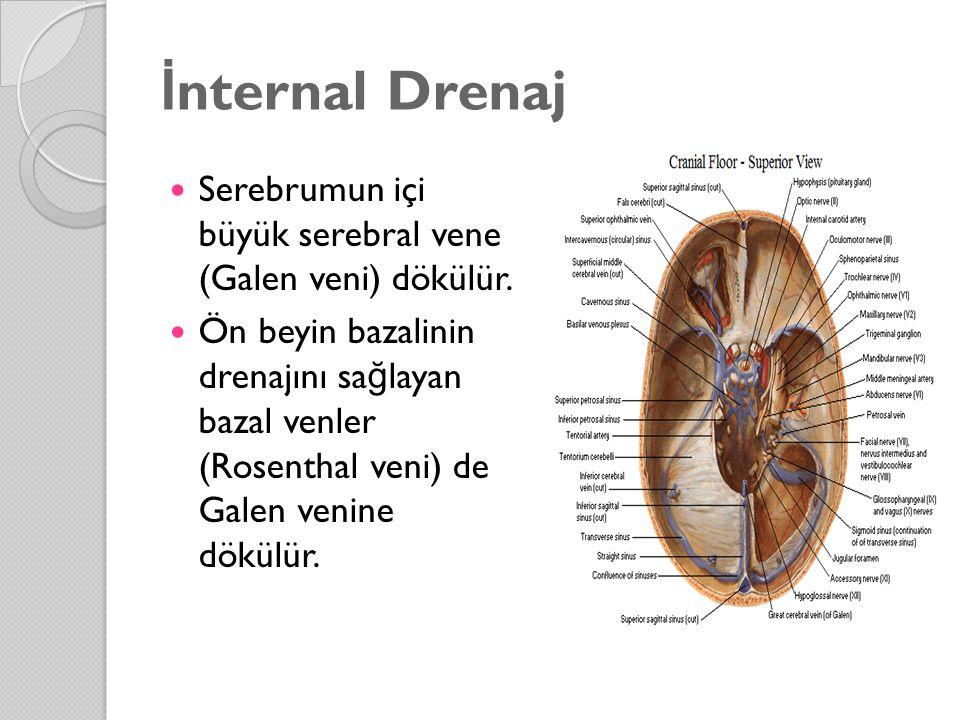 İ nternal Drenaj Serebrumun içi büyük serebral vene (Galen veni) dökülür. Ön beyin bazalinin drenajını sa ğ layan bazal venler (Rosenthal veni) de Gal