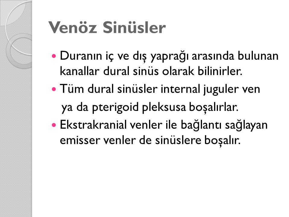 Venöz Sinüsler Duranın iç ve dış yapra ğ ı arasında bulunan kanallar dural sinüs olarak bilinirler. Tüm dural sinüsler internal juguler ven ya da pter