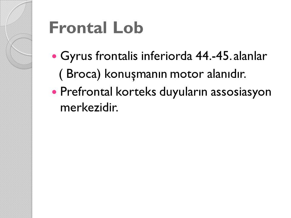 Frontal Lob Gyrus frontalis inferiorda 44.-45. alanlar ( Broca) konuşmanın motor alanıdır. Prefrontal korteks duyuların assosiasyon merkezidir.
