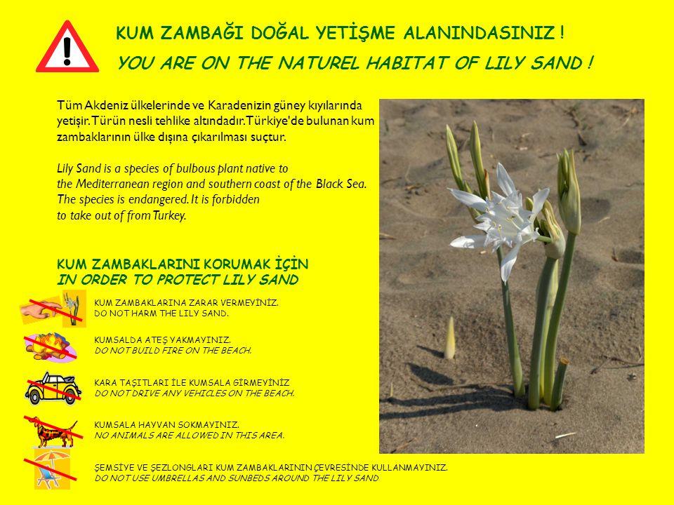 KUM ZAMBAKLARINI KORUMAK İÇİN IN ORDER TO PROTECT LILY SAND KUM ZAMBAĞI DOĞAL YETİŞME ALANINDASINIZ ! YOU ARE ON THE NATUREL HABITAT OF LILY SAND ! KU