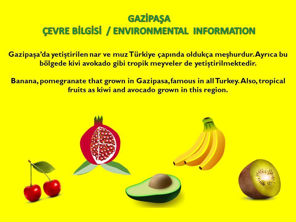 Gazipaşa'da yetiştirilen nar ve muz Türkiye çapında oldukça meşhurdur. Ayrıca bu bölgede kivi avokado gibi tropik meyveler de yetiştirilmektedir. Bana
