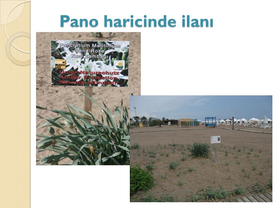 Pano haricinde ilanı