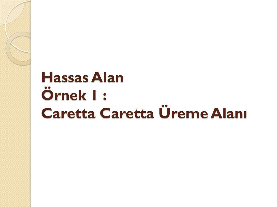 Hassas Alan Örnek 1 : Caretta Caretta Üreme Alanı