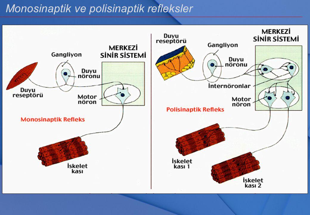 Monosinaptik ve polisinaptik refleksler