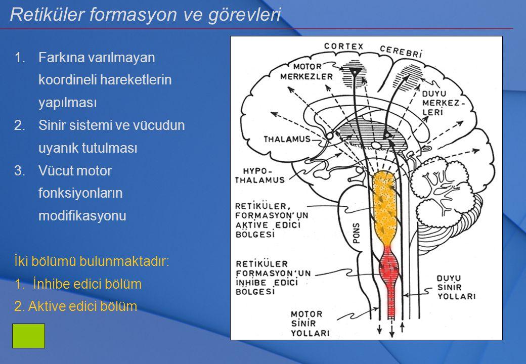 Retiküler formasyon ve görevleri 1.Farkına varılmayan koordineli hareketlerin yapılması 2.Sinir sistemi ve vücudun uyanık tutulması 3.Vücut motor fonk