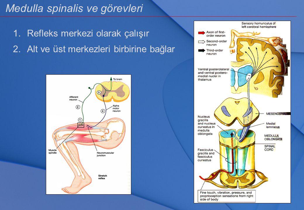 Medulla spinalis ve görevleri 1.Refleks merkezi olarak çalışır 2.Alt ve üst merkezleri birbirine bağlar