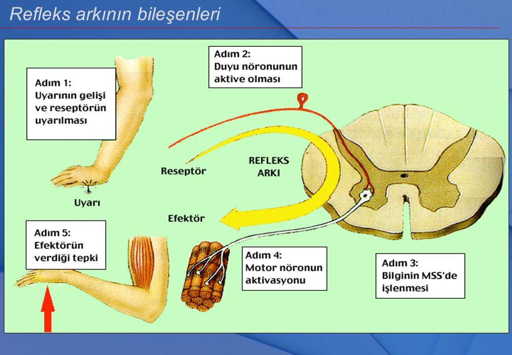 Refleks arkının bileşenleri Refleks işinin yapılabilmesi için en az 1 RESEPTÖR, 1 AFFERENT NÖRON, 1 MERKEZ, 1 EFFERENT NÖRON ve 1 EFFEKTÖR ORGAN olmal