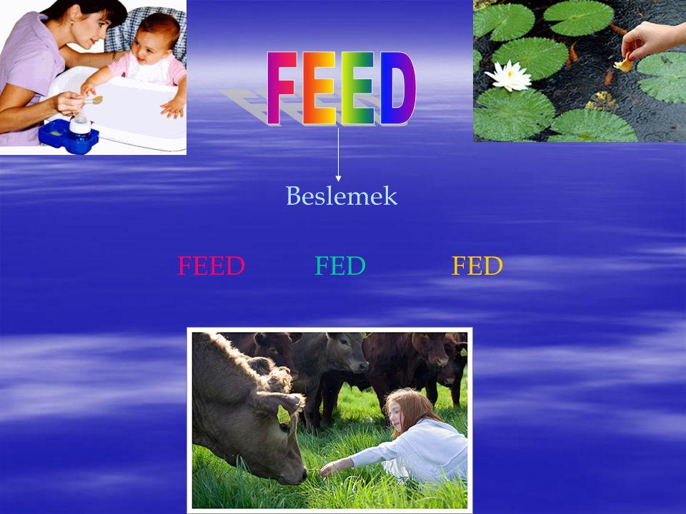 Beslemek FEEDFEDFED
