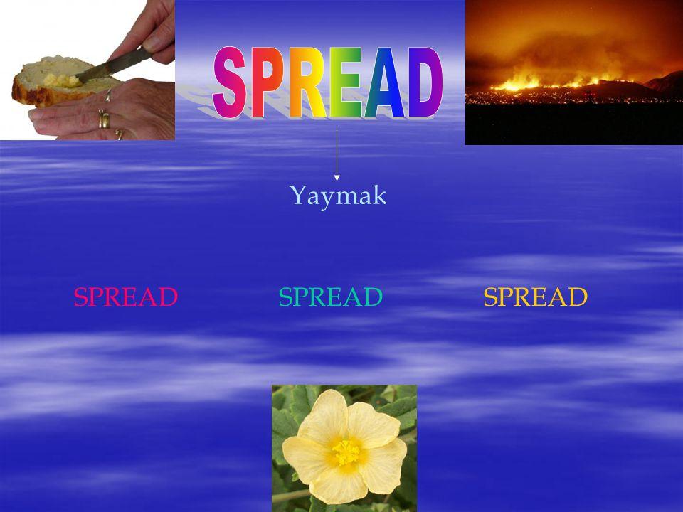 Yaymak SPREADSPREADSPREAD