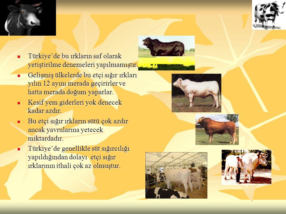 Türkiye'de bu ırkların saf olarak yetiştirilme denemeleri yapılmamıştır. Türkiye'de bu ırkların saf olarak yetiştirilme denemeleri yapılmamıştır. Geli