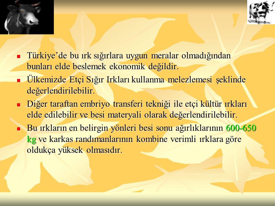 Türkiye'de bu ırk sığırlara uygun meralar olmadığından bunları elde beslemek ekonomik değildir. Türkiye'de bu ırk sığırlara uygun meralar olmadığından