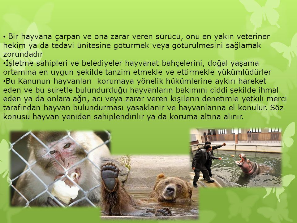 Bir hayvana çarpan ve ona zarar veren sürücü, onu en yakın veteriner hekim ya da tedavi ünitesine götürmek veya götürülmesini sağlamak zorundadır İşletme sahipleri ve belediyeler hayvanat bahçelerini, doğal yaşama ortamına en uygun şekilde tanzim etmekle ve ettirmekle yükümlüdürler Bu Kanunun hayvanları korumaya yönelik hükümlerine aykırı hareket eden ve bu suretle bulundurduğu hayvanların bakımını ciddi şekilde ihmal eden ya da onlara ağrı, acı veya zarar veren kişilerin denetimle yetkili merci tarafından hayvan bulundurması yasaklanır ve hayvanlarına el konulur.