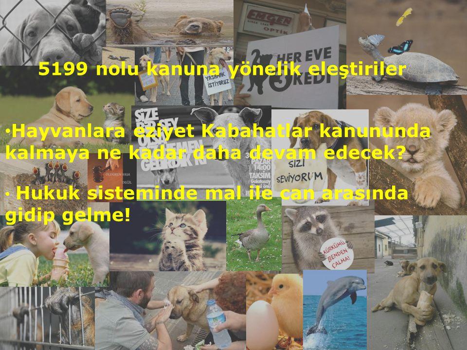 Hayvanlara eziyet Kabahatlar kanununda kalmaya ne kadar daha devam edecek? Hukuk sisteminde mal ile can arasında gidip gelme! 5199 nolu kanuna yönelik