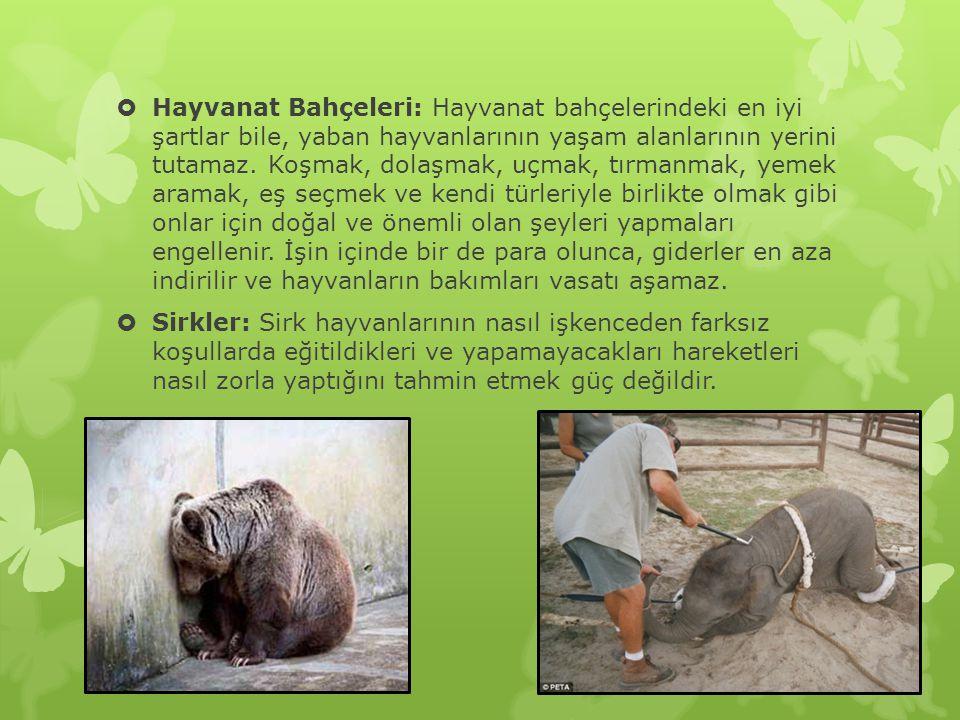  Hayvanat Bahçeleri: Hayvanat bahçelerindeki en iyi şartlar bile, yaban hayvanlarının yaşam alanlarının yerini tutamaz.