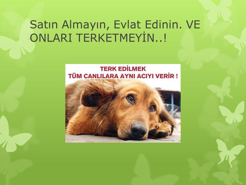 Satın Almayın, Evlat Edinin. VE ONLARI TERKETMEYİN..!