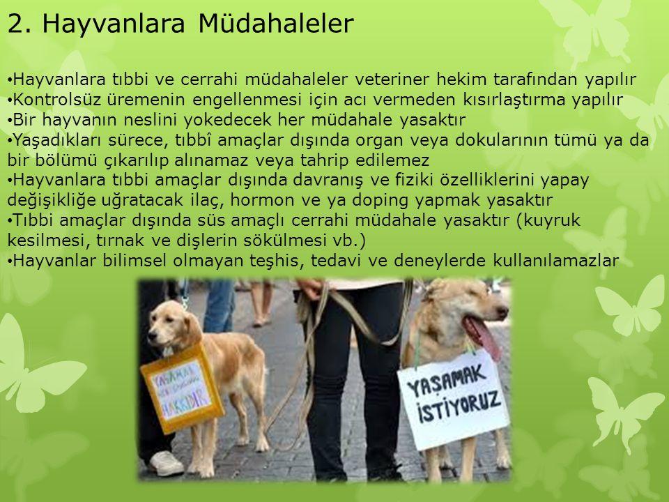 2. Hayvanlara Müdahaleler Hayvanlara tıbbi ve cerrahi müdahaleler veteriner hekim tarafından yapılır Kontrolsüz üremenin engellenmesi için acı vermede
